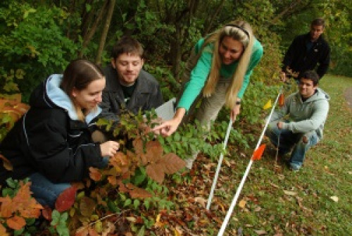 Dr. Benda Young and students examines leaves on the edge of a line of trees